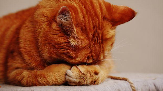 CDC: cani e gatti non contagiano e non sono stati contagiati