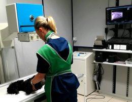 Diagnostica per immagini – Radiologia