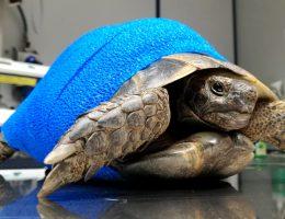 Medicina e chirurgia degli animali non convenzionali