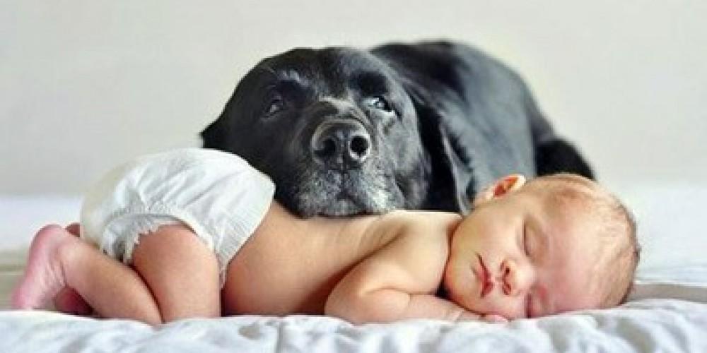 Pets e bebè: qualche consiglio per far convivere i piccoli della vostra vita