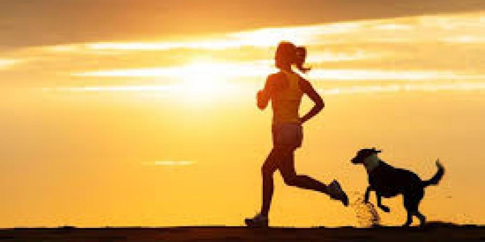 Dog jogging