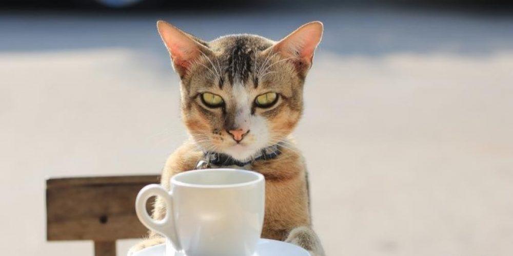 Ipertensione nei gatti e danni oculari