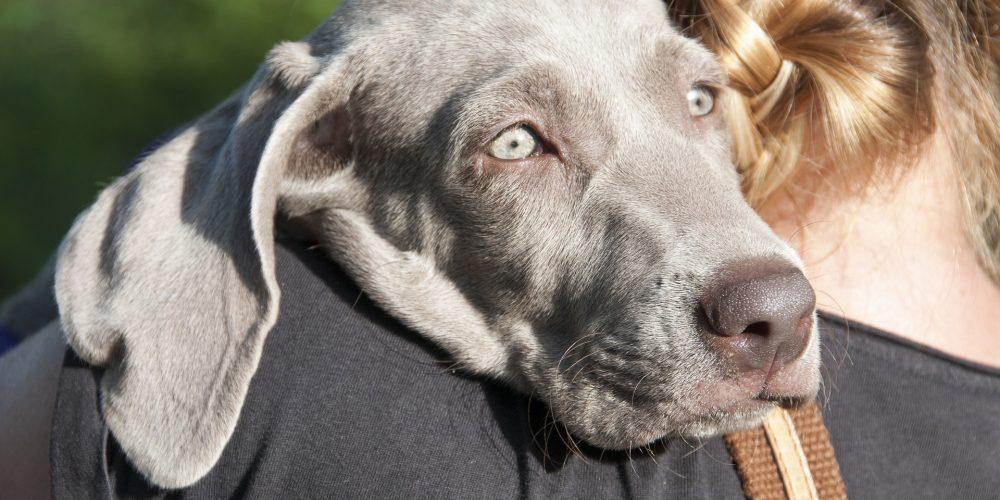 Lesioni acute cerebrali nel cane e nel gatto: si parla di ictus?